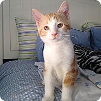 Adopt A Pet :: Butterscotch - Plymouth, MN