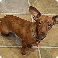 Adopt A Pet :: Alana - Decatur, GA