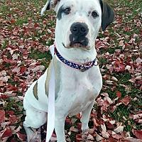 Adopt A Pet :: Spadey - Columbus, OH