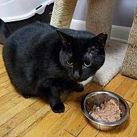 Adopt A Pet :: Morticia - Bronx, NY