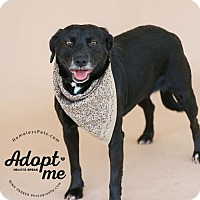 Adopt A Pet :: Sandy - laid back & sweet! - Marietta, GA