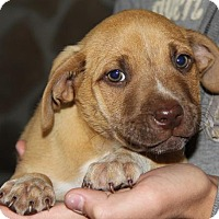Adopt A Pet :: Leif - Parker Ford, PA