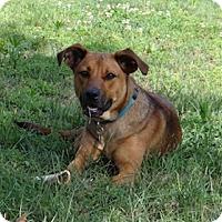 Adopt A Pet :: Carter - Homewood, AL