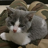 Adopt A Pet :: Cinco de Mayo - Scottsdale, AZ