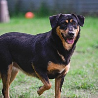Adopt A Pet :: Maggie - Virginia Beach, VA