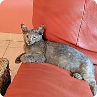 Adopt A Pet :: Silver - Tampa, FL