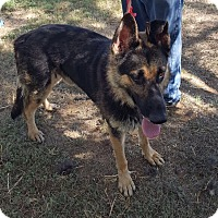 Adopt A Pet :: Cooper-Referral - Dripping Springs, TX