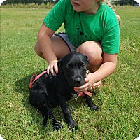 Adopt A Pet :: Krystal - Weatherford, TX