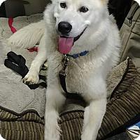 Adopt A Pet :: Roscoe - Tweed, ON