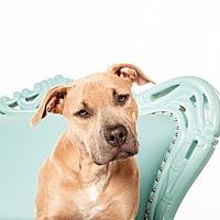 Adopt A Pet :: Godiva - San Francisco, CA