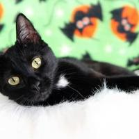 Adopt A Pet :: Patience Virtue - Mission, KS