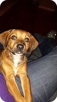Terrier (Unknown Type, Medium) Mix Puppy for adoption in Walker, Louisiana - Luna