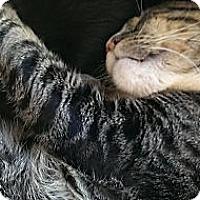 Adopt A Pet :: Sammie - Lakewood, CA