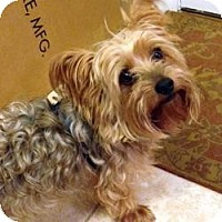 Adopt A Pet :: Henry - Greenfield, IN