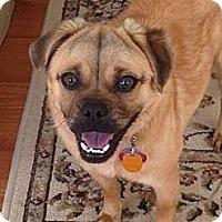 Adopt A Pet :: Penelope - Midway, KY