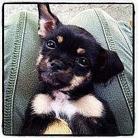 Adopt A Pet :: Jessica - Los Angeles, CA