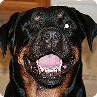 Adopt A Pet :: Rosie - Seffner, FL