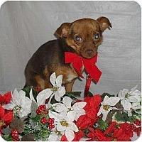 Adopt A Pet :: Princess Chloe - Chandlersville, OH