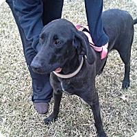 Adopt A Pet :: Jed - Silsbee, TX