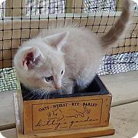 Adopt A Pet :: Ringo - Port Republic, MD