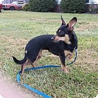 Adopt A Pet :: TOFFEE - Wilmington, NC