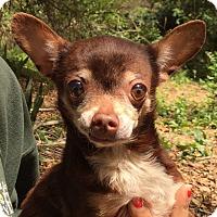 Adopt A Pet :: Reese - Orlando, FL