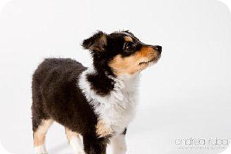 Collie Mix Puppy for adoption in Cedar Rapids, Iowa - Minnie