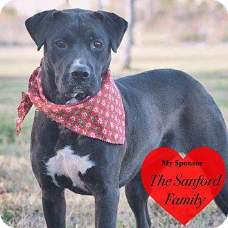 Labrador Retriever Mix Dog for adoption in San Leon, Texas - Abigail
