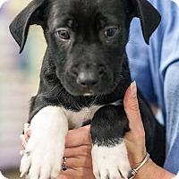 Adopt A Pet :: Fellow - Gainesville, FL