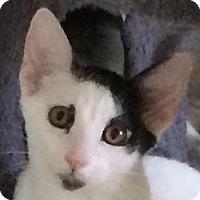 Adopt A Pet :: Brock - Auburn, CA