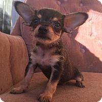 Adopt A Pet :: Mork - Loganville, GA