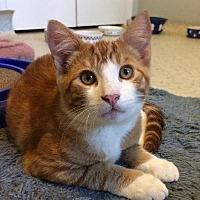 Adopt A Pet :: Caius - Half Moon Bay, CA