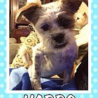 Adopt A Pet :: Harpo - Great Bend, KS