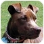 Photo 1 - American Staffordshire Terrier Dog for adoption in Tyler, Texas - TG-Rosie