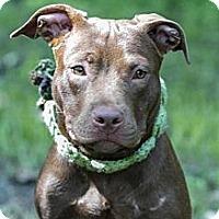 Adopt A Pet :: Madison - Winter Haven, FL