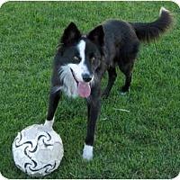 Adopt A Pet :: Jax - Salt Lake City, UT