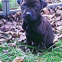 Adopt A Pet :: Oberyn - Newport, VT