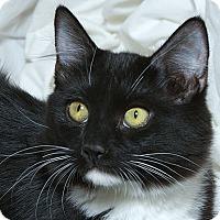 Adopt A Pet :: Hilton V - Sacramento, CA