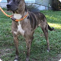 Adopt A Pet :: Dee - Dumfries, VA