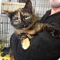 Adopt A Pet :: Maple - Portland, ME