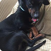 Adopt A Pet :: Greer - Decatur, GA