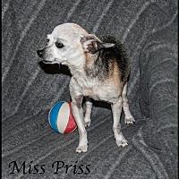 Adopt A Pet :: Miss Priss - Ada, OK
