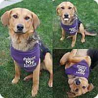 Adopt A Pet :: Sadie - Edmonton, AB