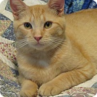 Adopt A Pet :: .Sammy - Ellicott City, MD