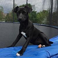 Adopt A Pet :: GIGI - Pine Grove, PA