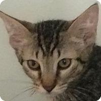 Adopt A Pet :: Brice - Auburn, CA