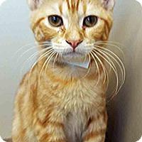Adopt A Pet :: Fred - Oswego, IL