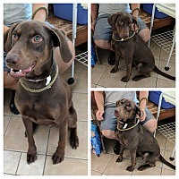 Adopt A Pet :: Tingle - Middletown, NY