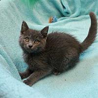 Adopt A Pet :: Butch Cassidy - Mebane, NC