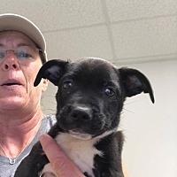 Adopt A Pet :: Zappy - GREENLAWN, NY